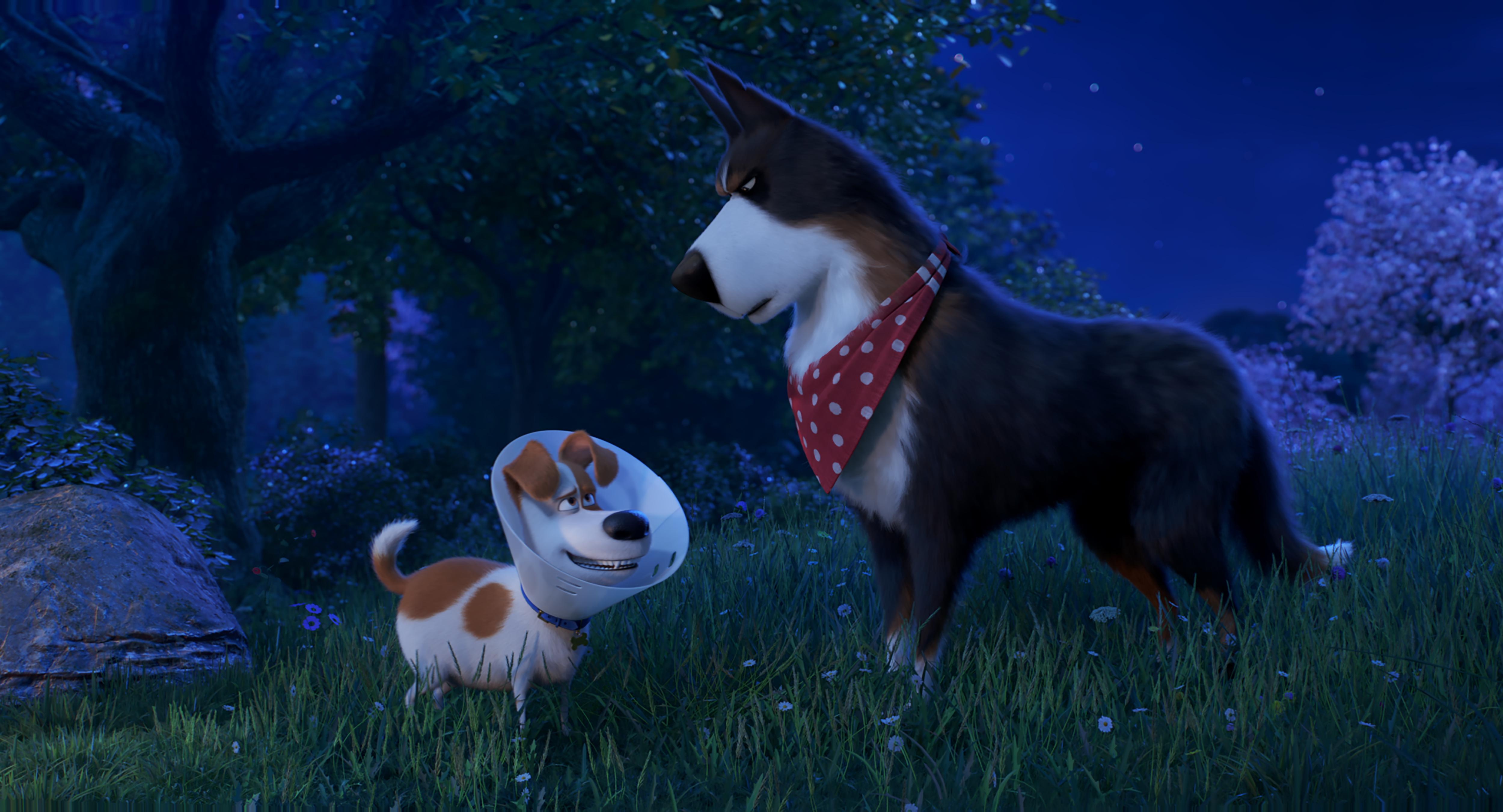 Купить билеты в кино на Тайная жизнь домашних животных 2 The Secret Life of Pets 2 | расписание сеансов, трейлер, обзор фильма, отзывы — ParkSeason