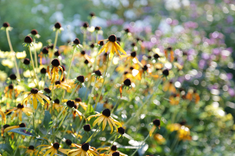 Купить билеты в кино на Сад художника: Американский импрессионизм The Artist's Garden: American Impressionism | расписание сеансов, трейлер, обзор фильма, отзывы — ParkSeason
